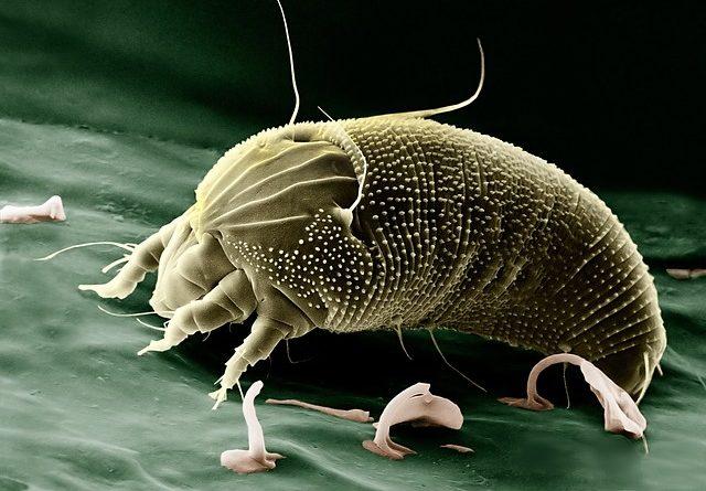 maladie parasitaire