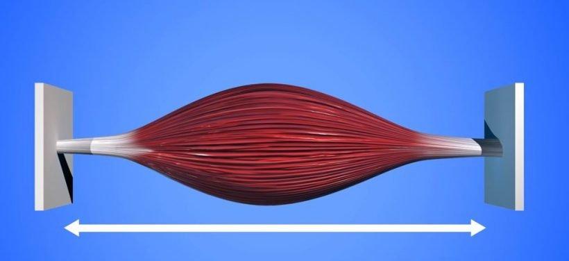 isométrie musculation