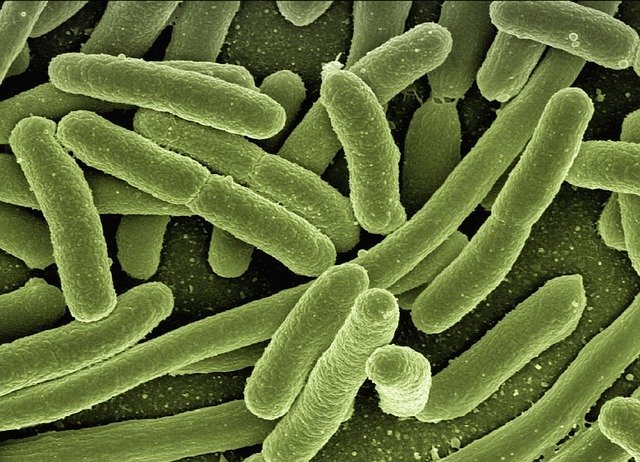 Tuberculose : Connaitre les risques et les traitements